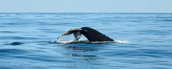 Whale Watching at the Farallon Islands, California