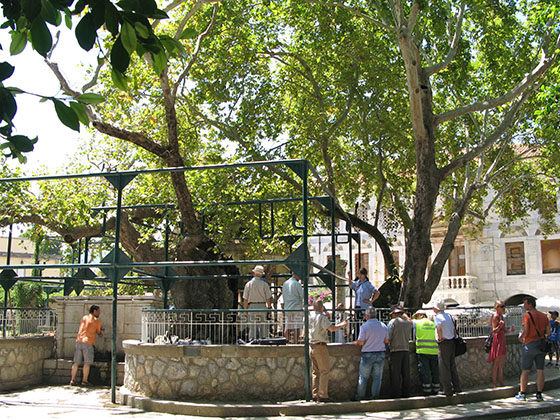 Tree of Hippocrates in Kos