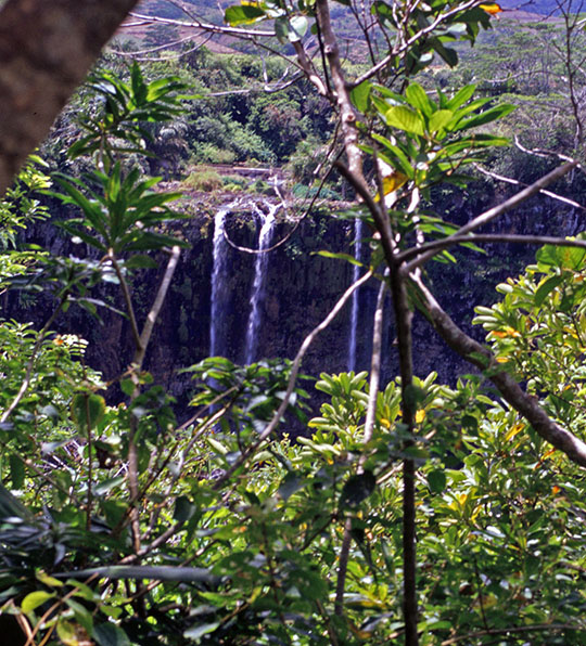 The Chamarel waterfall was barely visible in 1992   One had to peep through the tree branches to try to see it